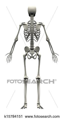 Clipart of male human skeleton back view k15784151 search clip male human skeleton back view ccuart Gallery