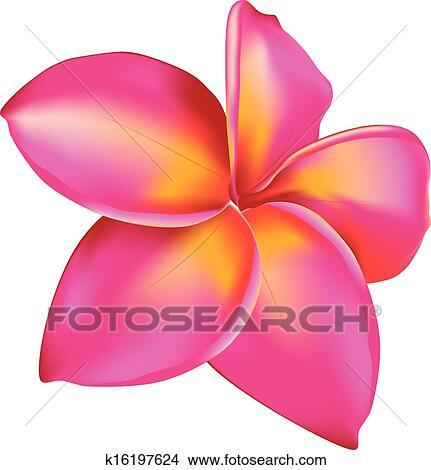 Clipart Plumeria Fleur K16197624 Recherchez Des Clip Arts Des