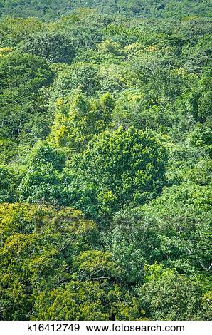 stock photograph of rainforest background k16412749 search stock