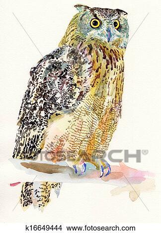 çizimler Asil Sulu Boya Painting Yüzünden Kuş Baykuş Bir