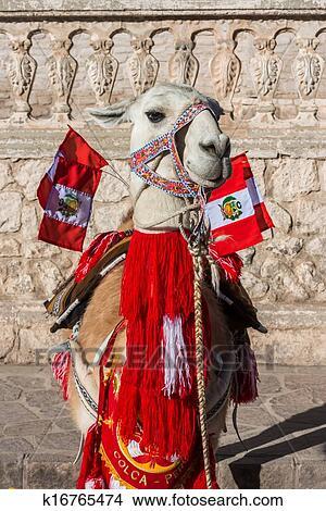 Lama con peruviano bandiere arequipa perù immagine