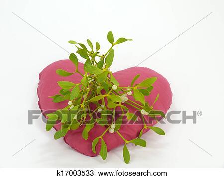Mistletoes Stock Image K17003533 Fotosearch