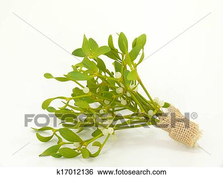 Mistletoes Stock Photograph