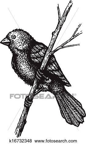 Clipart Petit Oiseau Branche K16732348 Recherchez Des Cliparts