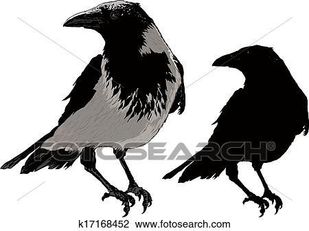 الأسود الغربان Clipart K17168452 Fotosearch