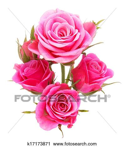 Stock photography of pink rose flower bouquet isolated on white pink rose flower bouquet isolated on white background cutout mightylinksfo