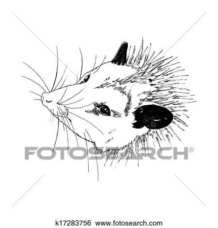 Clip Art - zarigüeya k17283756 - Buscar Clip Art, Ilustraciones de ...