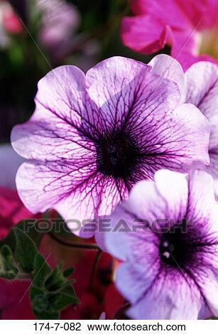 Stock Foto - frühling, blumen-, draußen, bluehende, natur, blumen ...