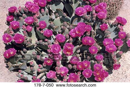 Stock Fotografie - natur, bluehende, blumen, rosa, draußen, blüte ...