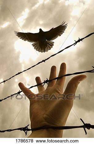 Picture - Hand reaching out for bird. Fotosearch - Search Stock Photos, Images, Print Photographs, and Photo Clip Art