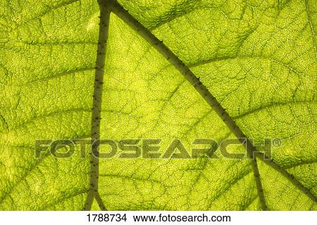 Stock Photo Of A Close Look At The Anatomy Of A Leaf 1788734