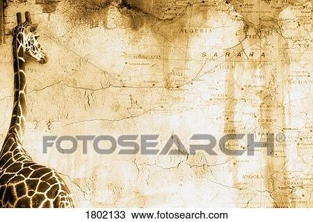 Giraffe looking at old map of Africa Stock Image | 1802133