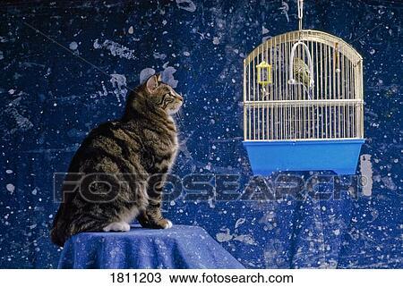 Banque de photo chat et oiseau 1811203 recherchez for Oiseau domestique interieur