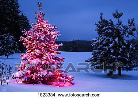 een verlicht buiten kerstboom