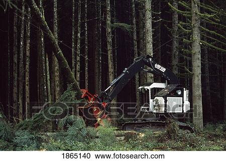 Feller-buncher with a tree it has just cut in a tree plantation, Washington  State Forest, Olympic Peninsula, WA Stock Image