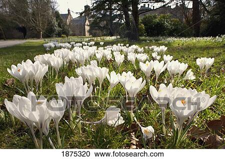 Stock Photography Of Northumberland England White Flowers In Bloom