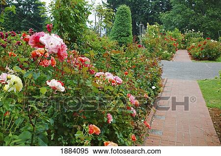 Stock Image of a path in portland rose garden; portland, oregon ...