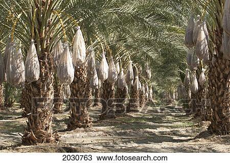 Ταχύτητα χρονολόγηση στο palm springs ca, χρονολογείται στο σκοτάδι.
