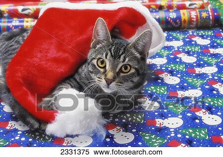 grey tabby cat with santa claus hat lying on christmas gift wrapvancouver british columbia canada - How To Wrap A Cat For Christmas
