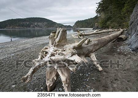 Driftwood On The Beach And Deception P Bridge In Distance Oak Harbor Washington United States Of America