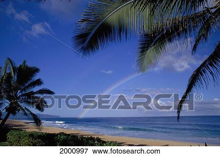 Picture Of Double Rainbow Into Ocean One Faint Palm Tree Frames