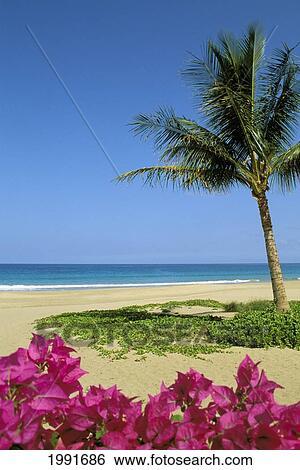 Hawaii Big Island Hapuna Beach State Park Palm Tree