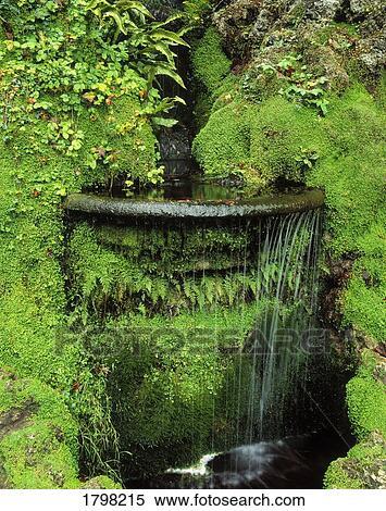 Banque d 39 image jardin japonais powerscourt jardins co - Jardin japonais mousse ...