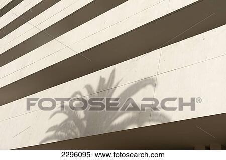 Banque d image maroc ombre paume arbre blanc béton bureau