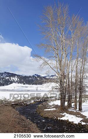 River Running Through Yellowstone National Park In Winter