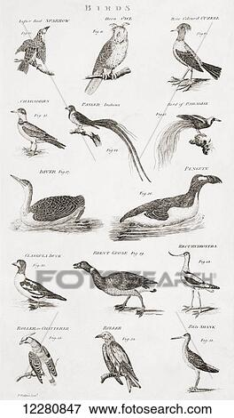 Different Types Of Birds From An 18th Century Print Stock