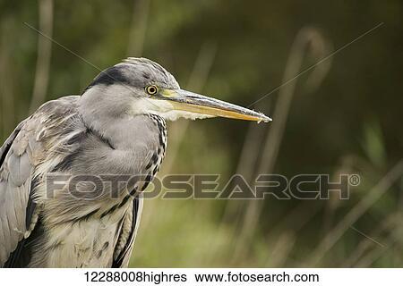 stock bilder vogel mit langer schnabel und grauer feathers