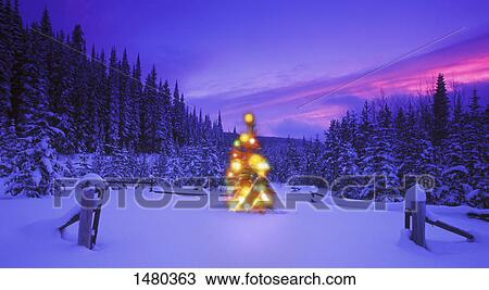 Mountain Christmas Tree.Christmas Tree In The Mountains At Dusk British Columbia Canada Stock Image