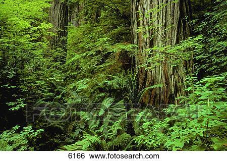 3d Fußboden Wald ~ Stock bilder großer baum badehose und wald fußboden 6166