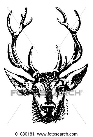 Clipart Of Flora Fauna Line Art A 19th Century Engraving