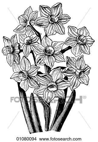 Drawings Of Flora Fauna Line Art A 19th Century Engraving