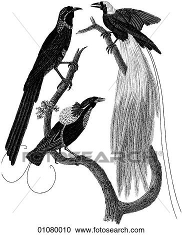 Stock Illustrations Of Flora Fauna Line Art A 19th Century