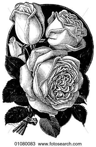 desenho flora fauna linha arte um 19º século gravura