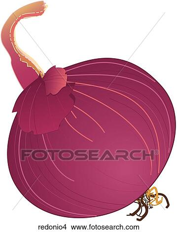 Red Onions-One Stock Illustration | redonio4 | Fotosearch