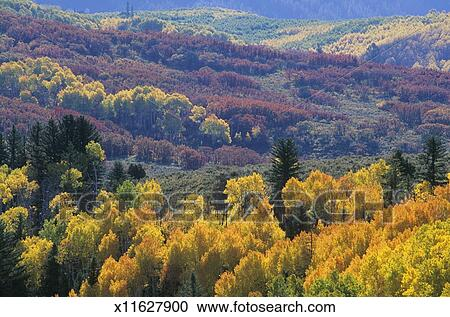 USA, Colorado, Redstone, foliage near McClure Pass, autumn Stock Image