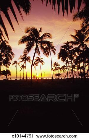 Palm Trees At Sunset Waikiki Beach Honolulu Oahu Hawaii Usa Stock Image