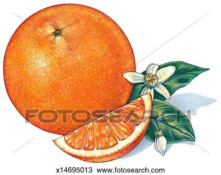 Dessin orange x14695013 recherchez des cliparts des - Orange dessin ...