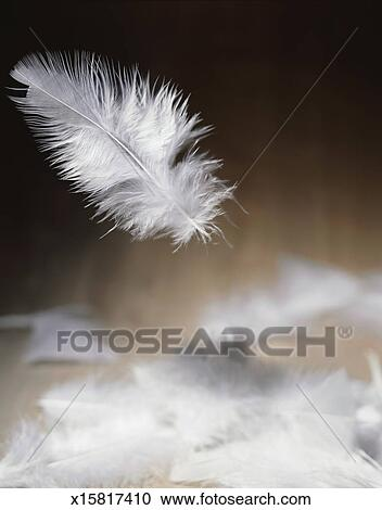 stock photography of falling feathers x15817410 search stock