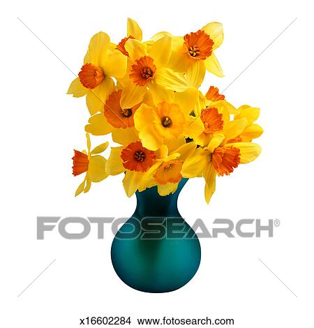 Stock Photo Of Daffodils In A Vase X16602284 Search Stock Images