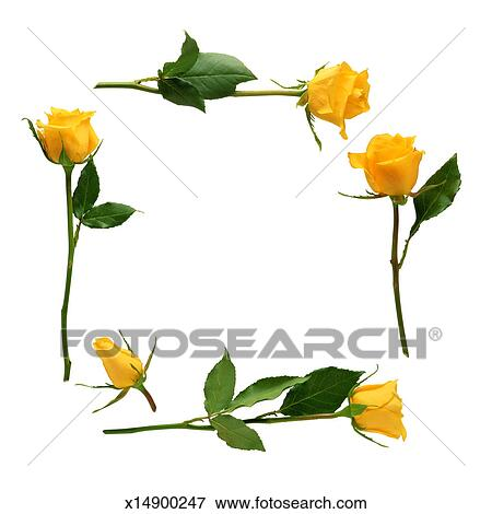 picture of yellow rose border x14900247 search stock photography rh fotosearch com yellow rose clipart png yellow tea rose clip art