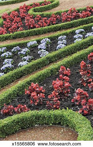 Boxwood Begonia And Alyssum In A Formal Garden Stock Photograph