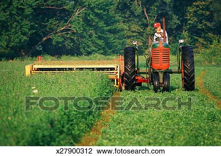Farmer on tractor with flail mower Stock Image