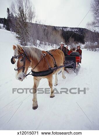 stock photography of horse pulling sleigh on snow covered road
