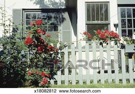 Stock photo of house with white picket fence and flowers x18082812 house with white picket fence and flowers mightylinksfo
