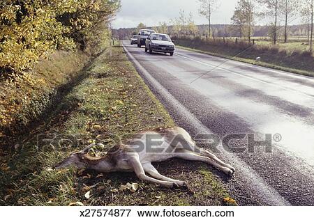 ピクチャー - 鹿, あること, 死...