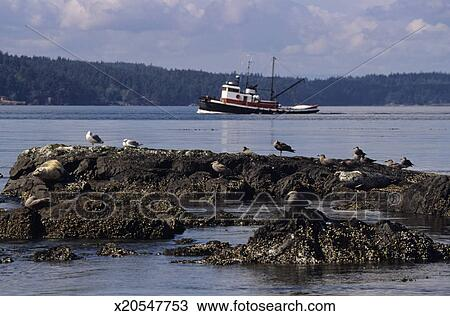 Stock photo of fishing boat sailing on river san juan for Fishing san juan islands